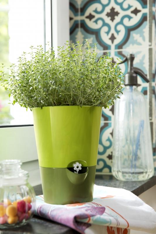 kr utertopf fresh herbs gr n 9 95. Black Bedroom Furniture Sets. Home Design Ideas