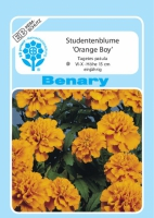 Benary Studentenblume Orange Boy, niedrig wachsend