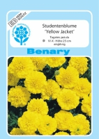 Benary Studentenblume Yellow Jacket, leuchtend gelb