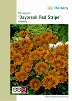 Daybreak F1 Red Stripe