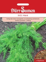 Dill Dinos Anethum graveolens