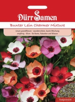 Linum grandiflorum Charmer Mix