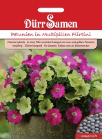 Petunia hybrida in Multipille Flirtini