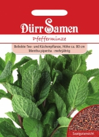 Pfefferminze Mentha piperita