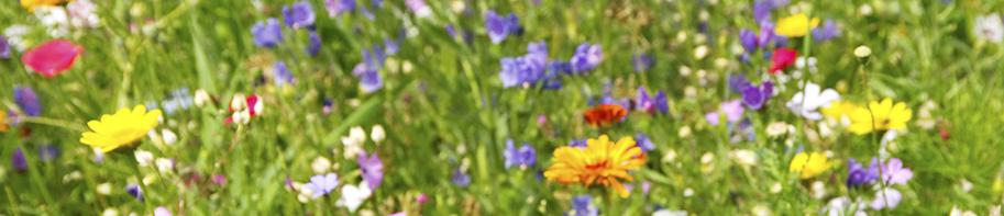Blumenmischung