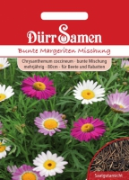 Chrysanthemum carinatum Bunte Margeriten