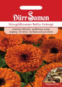 Calendula officinalis Ringelblumen Balls Orange